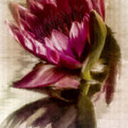 Reflected Waterlily Art Print by Jill Balsam