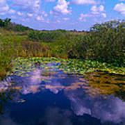 Reflecting In The Glades Art Print
