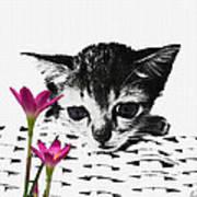 Reflecting Kitten Art Print