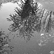 Reflection 002 Art Print