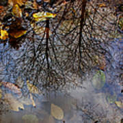 Reflection In A Puddle Art Print