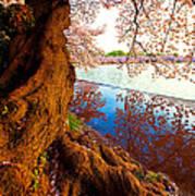 Reflection Of Spring Art Print by Bernard Chen