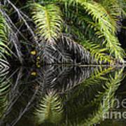 Reflections Marimbus River Brazil 2 Art Print