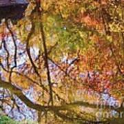 Reflections Of A Colorful Fall 002 Art Print