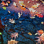Seasons Of Refletion Art Print