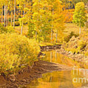 Reflections Of Gold Art Print