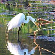 Reflections On Wildwood Lake Art Print