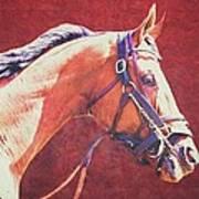 Regal Racehorse Art Print