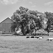Reive Blvd Barn 15059b Art Print