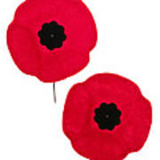 Remembrance Day Poppies Art Print