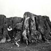 Remnant Of A Giant C. 1890 Art Print