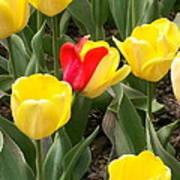 Renegade Tulip Art Print