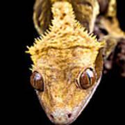 Reptile Close Up On Black Art Print