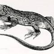Reptile Art Print
