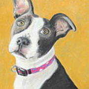 Rescued Pit Bull Art Print