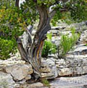 Resilient Tree Art Print