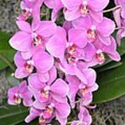 Resplendent Orchid Art Print