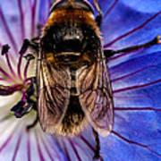 Resting Bee Art Print