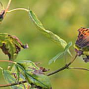 Resting Butterfly Art Print