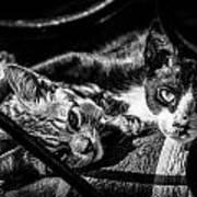 Resting Cats Art Print