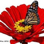 Resting Monarch Art Print