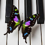 Resting On The Piano Art Print by Garry Gay