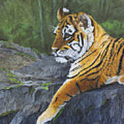Resting Place - Tiger Cub Art Print