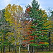 Retreating Pines Art Print