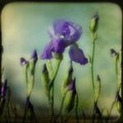 Retro Iris Metting Art Print