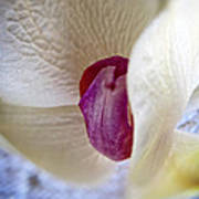 Revealing The Heart Of An Orchid Art Print