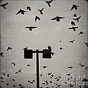 Revenge Of The Birds Art Print