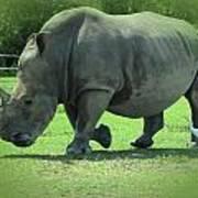 Rhino And Friend Art Print