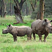 Rhino Family Art Print