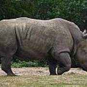 Rhino In The Wild Art Print