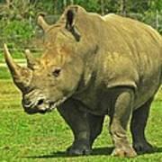 Rhino Look Art Print