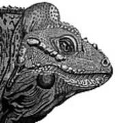 Rhinoceros Iguana Art Print