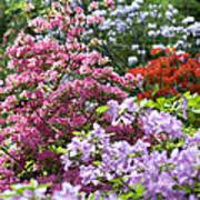 Rhododendron Garden Art Print