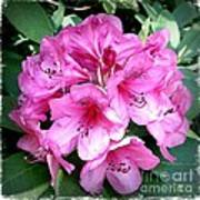 Rhododendron Square With Border Art Print