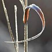 Ribbon Of Frost Art Print