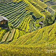 Rice Fields Terraces Art Print