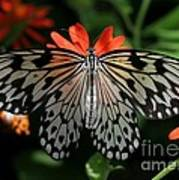 Rice Paper Butterfly Elegance Art Print