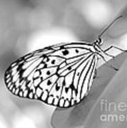 Rice Paper Butterfly Resting For A Second Art Print