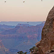 Riding The Air Currents Of The Grand Canyon Art Print