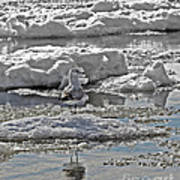 Riding The Ice Flow  Art Print