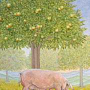 Right Hand Orchard Pig Art Print