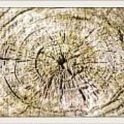 Rings Of A Tree Art Print