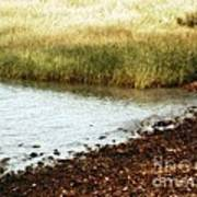 Rippled Water Rippled Reeds Art Print