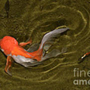 Ripples In A Shallow Pool Art Print