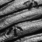 Ripples With Footprints Art Print