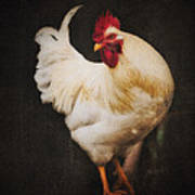 Rita's Rooster Art Print